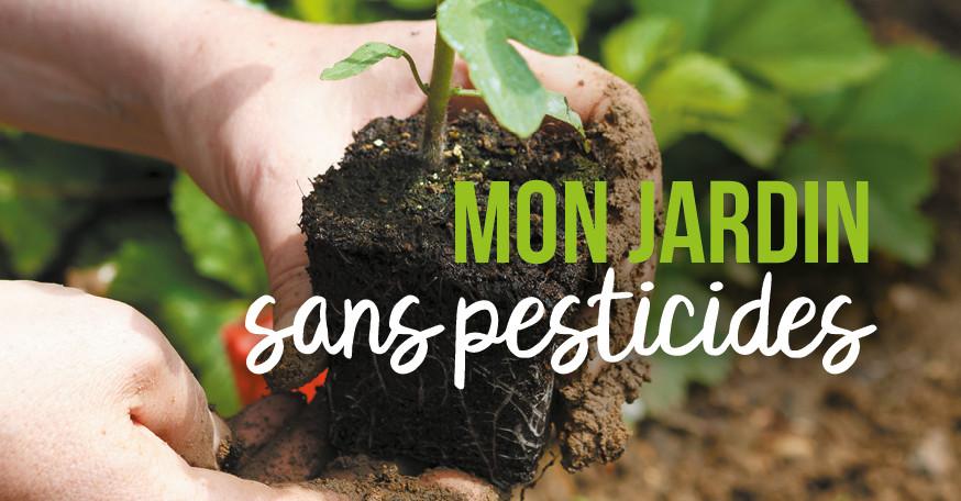 Loi Labbé : jardin sans pesticides